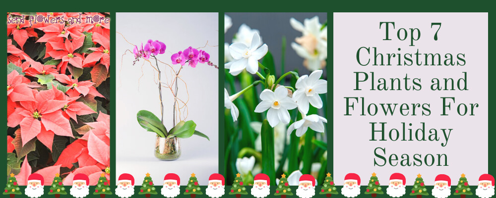 Top 7 Christmas Plants and Flowers You Can Thrive in this Holiday Season