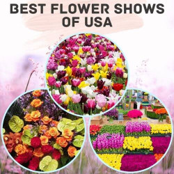 7 of the Best Flower and Garden Shows of USA