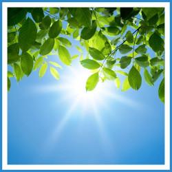 7 Heat – Tolerant Plants that Survive in Summer