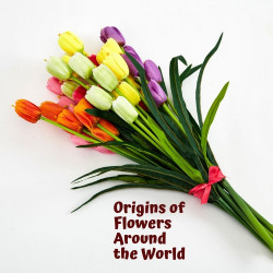 The Origins of Lovely Flowers around the World