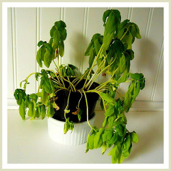 How to Revive Dying but Salvageable Plants