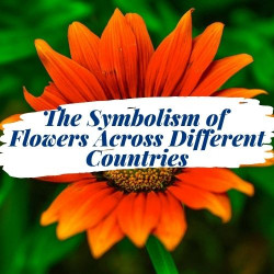 The Symbolism of Flowers across Different Countries
