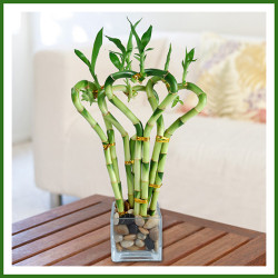 Top 10 HousePlants that Bring Good Luck and Wealth to Your Home