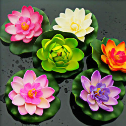 Top 6 Aquatic Flowers Which Floats on Water