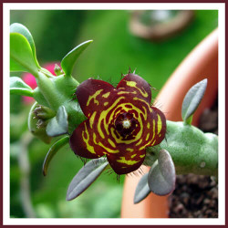 Top 7 Close to Extinction Plants and Flowers You Will Never See Again