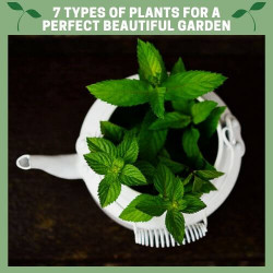 7 Types of Plants for a Perfect Beautiful Garden