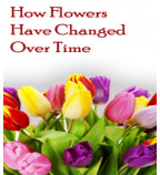 How Flowers Have Changed Over Time