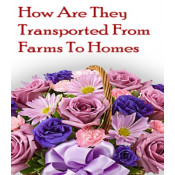 How Are They Transported From Farms To Homes