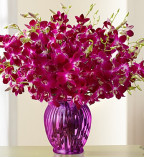 Buy Orchid Flowers