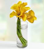 Buy Lilies Flowers
