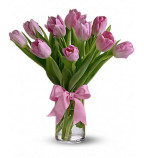 Buy Tulip Flowers