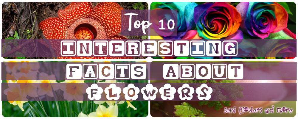 10 Things People might not know about Flowers