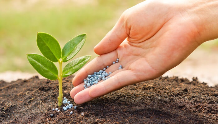 Over Fertilizing