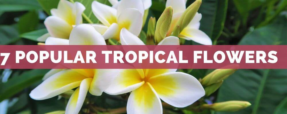 7 Popular Tropical Flowers around the World