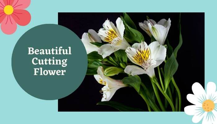 Beautiful Cutting Flowers