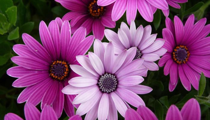 Flowers' Beauty