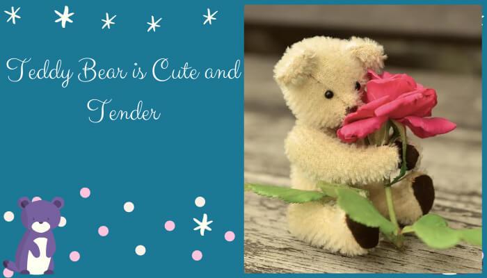 Teddy Bear is Cute and Tender