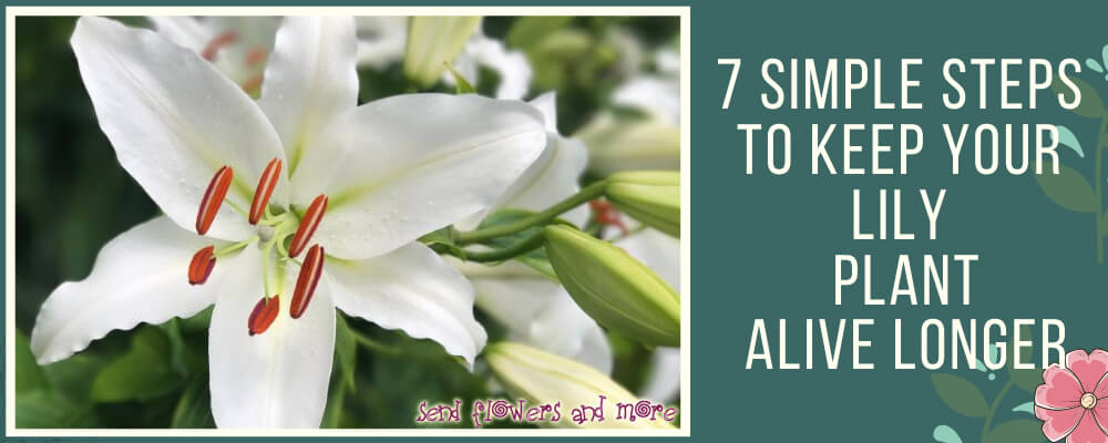 7 Simple Steps to Keep Your Lily Plant Alive Longer