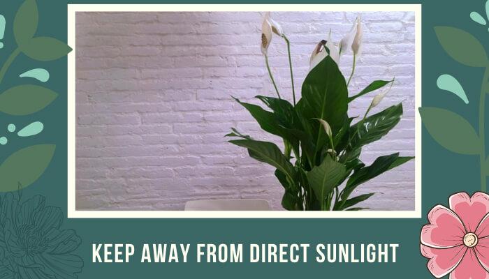 Keep Away from Direct Sunlight