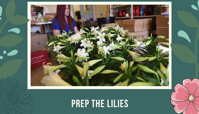 Prep the Lilies