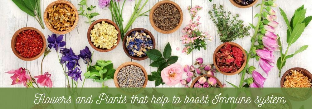Flowers and plants to boost immune system