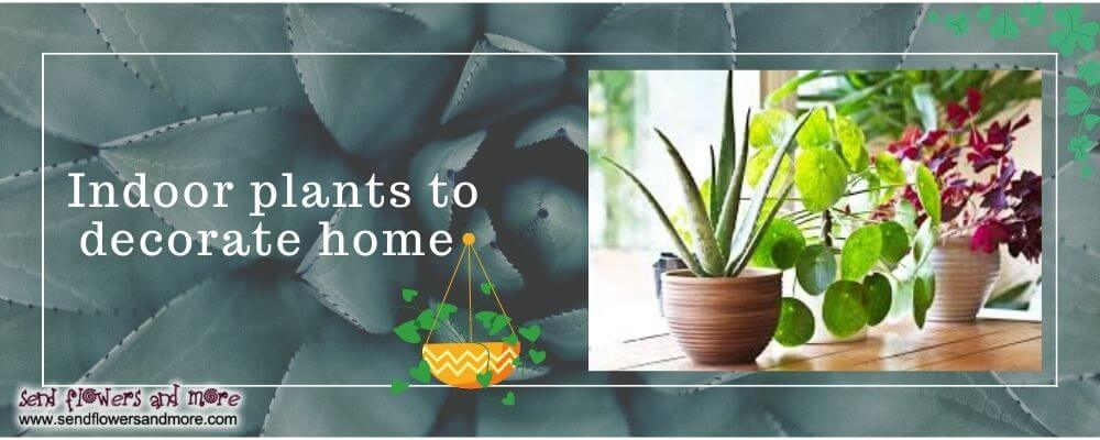 Indoor plants to decorate home
