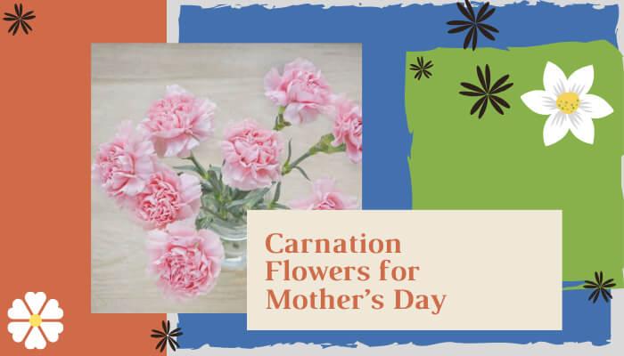 Carnation Flower for Mother's Day