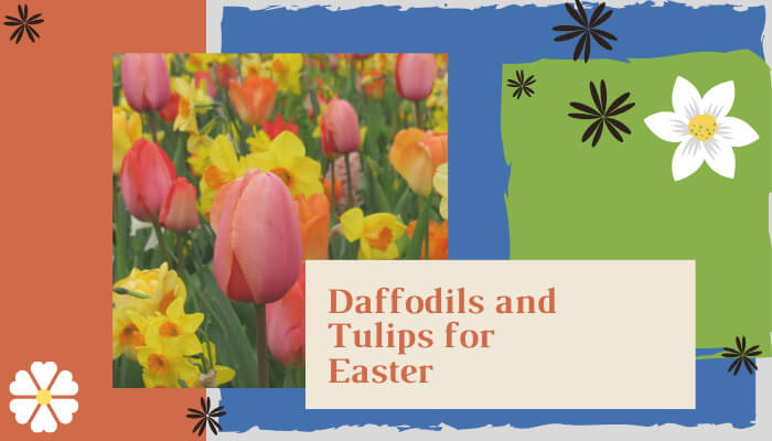 Daffodils and Tulips for Easter