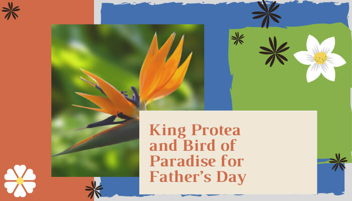 King Protea and Bird of Paradise for Father's Day