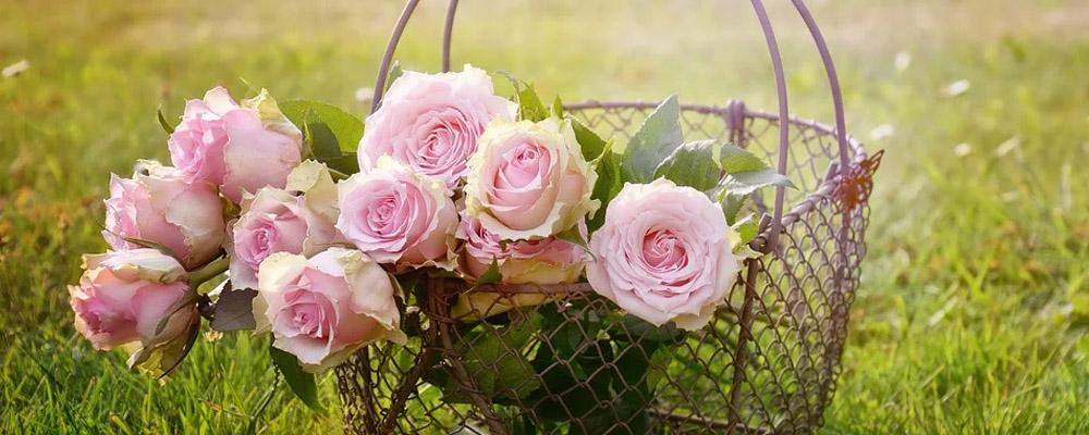 Birthday Rose Flower