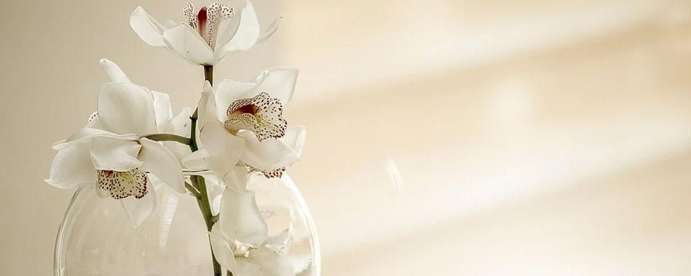 Impressive Orchids for Corporate