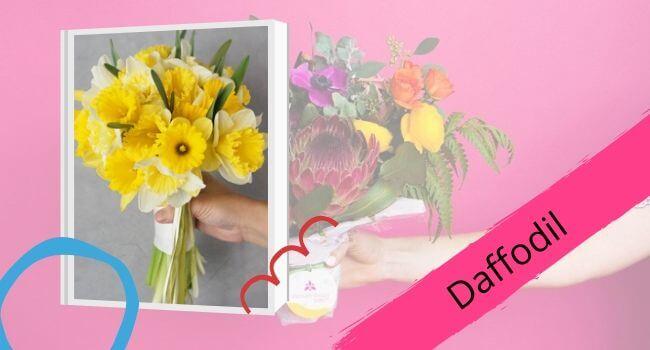 Daffodil for Mom