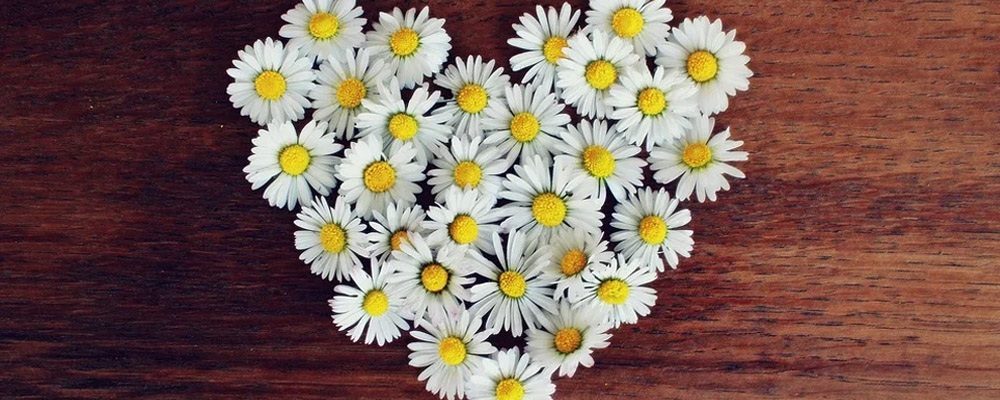 Daisies flower bouquet for anniversary