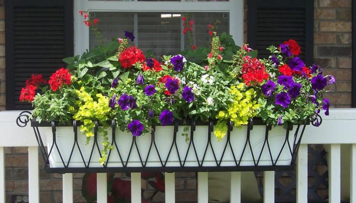 Fancy Trimmed Window Box