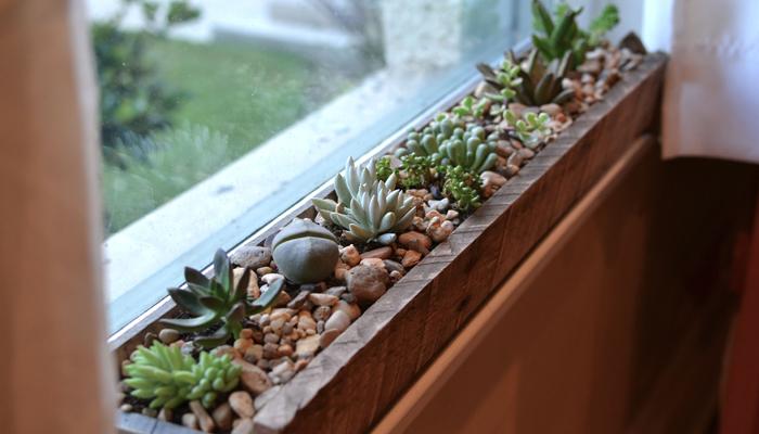 Succulent Indoor Window Box