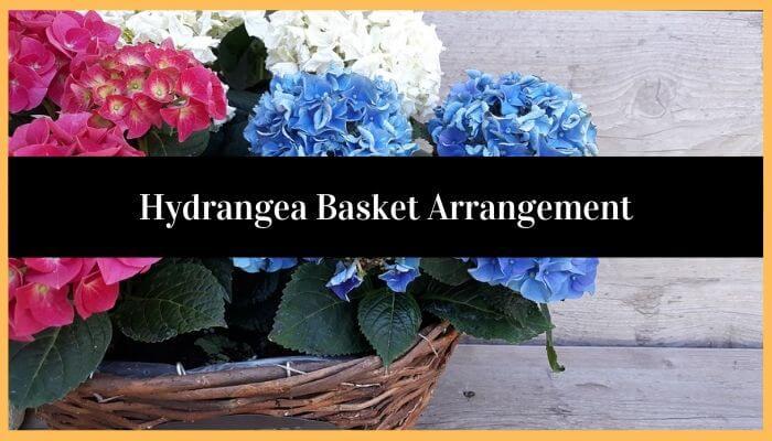 Hydrangea Basket Arrangement