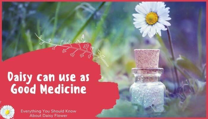 Daisy can use as Good Medicine