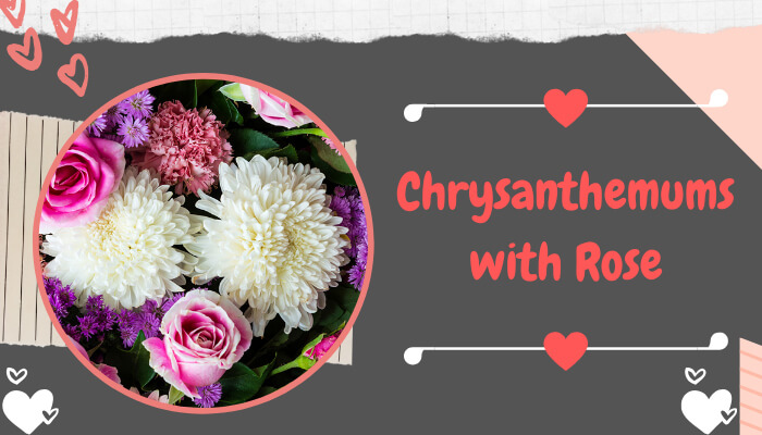 Chrysanthemums with Rose