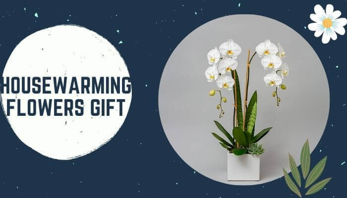 Housewarming Flowers gift