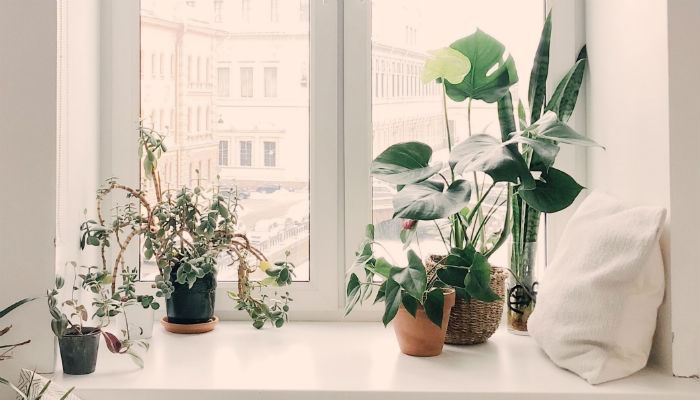 Floral Window or Door Frame Decor