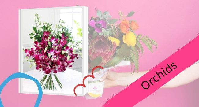 Orchids for Mom