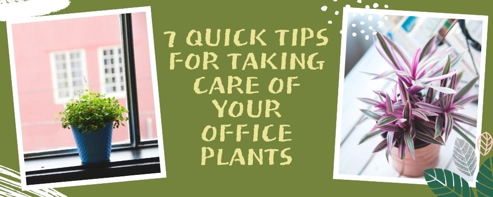 7 Quick Tips for Taking Care of Your Office Plants