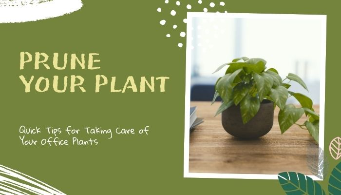 Prune Your Plant