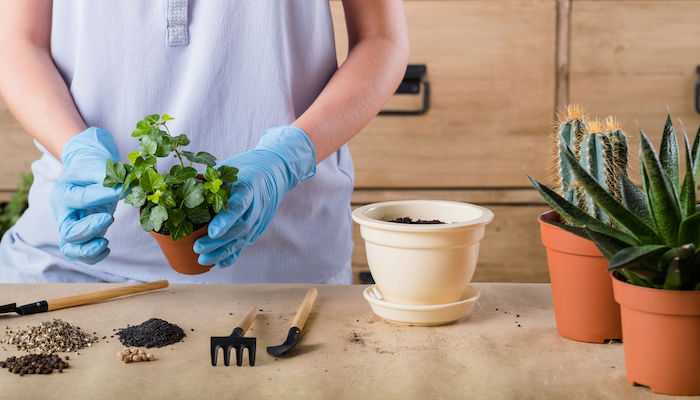 repot your plant