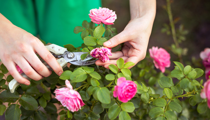 trim your plant