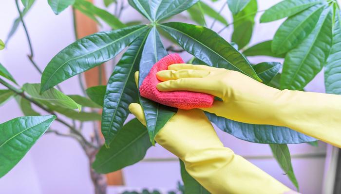 wipe your plant