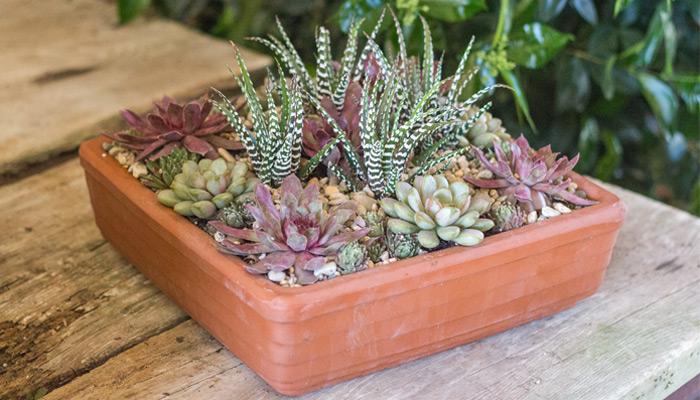 a terrarium or succulent garden