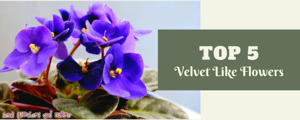 Top 5 Velvet like flowers that you can't resist yourself to touch