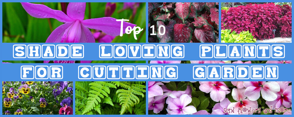 Top 10 Shade-Loving Plants for Cutting Garden