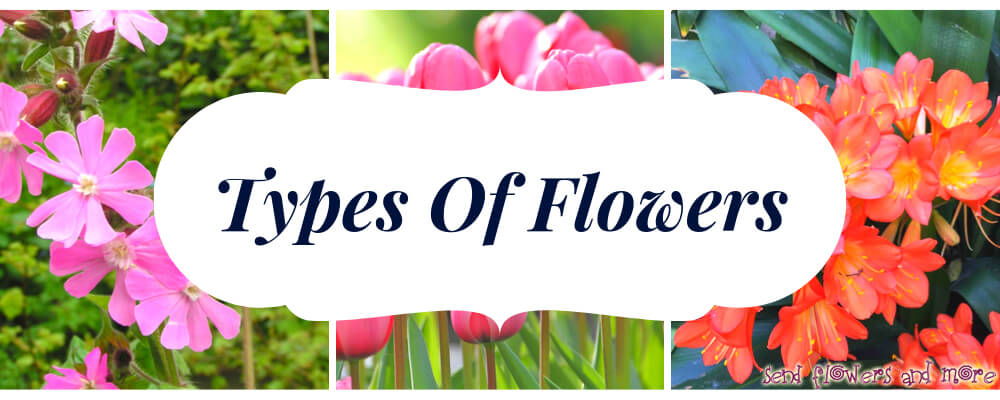 Types of Flowers with Definition, Meaning, Usage and Examples